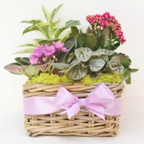 foxgloves flowers victoria bc florist designers choice planter basket - #Just Because