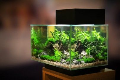 Fish tank with beautiful plants in it