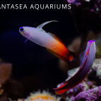 6 Easy Saltwater Aquarium Fish for Beginners