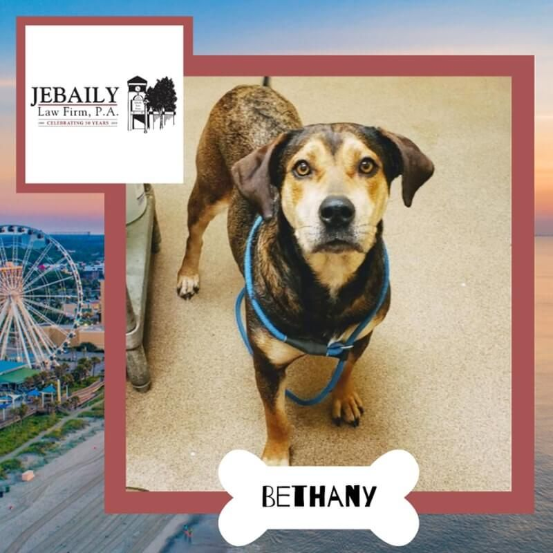 Dog Of the Month, Bethany!