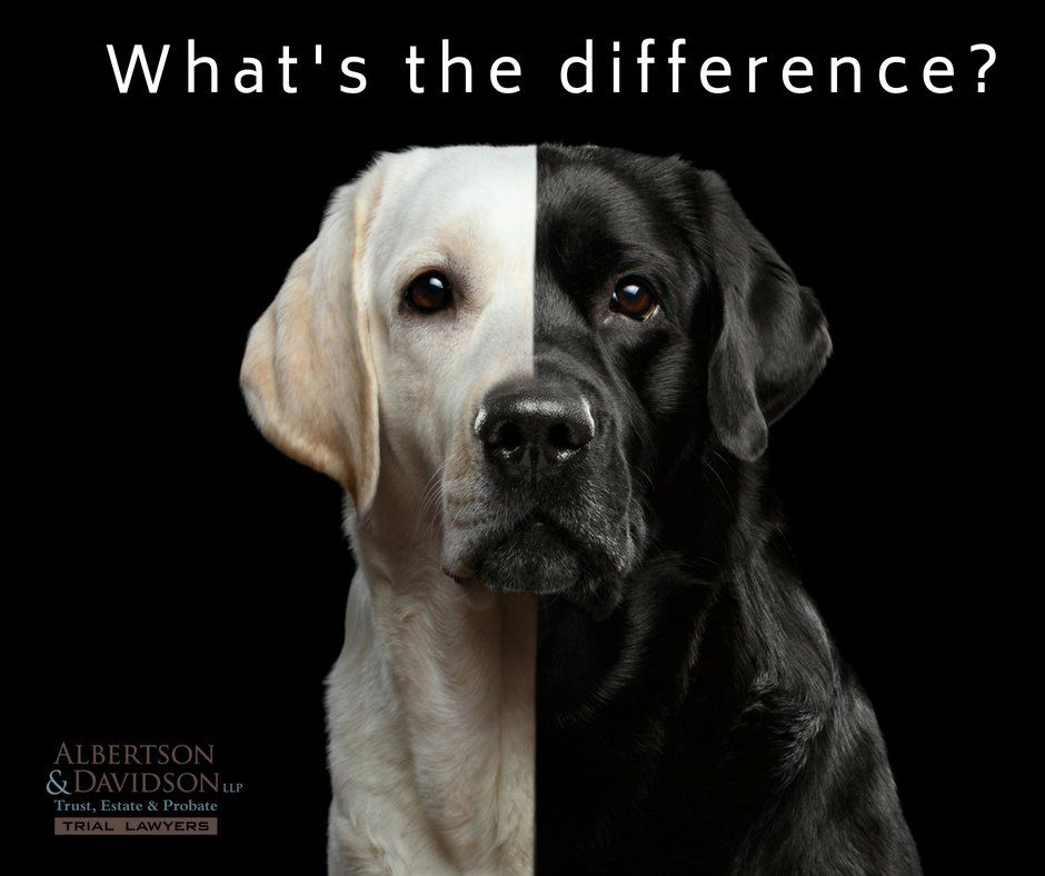 What's The Difference Between A Will And A Trust in California represented by a black and white dog.