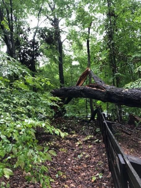 Tree fallen because of the storm