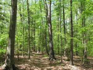 Forest in Franklin County NC where Sasser Law Firm helps people in debt