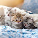 Kittens are an unexpected comfort during a divorce