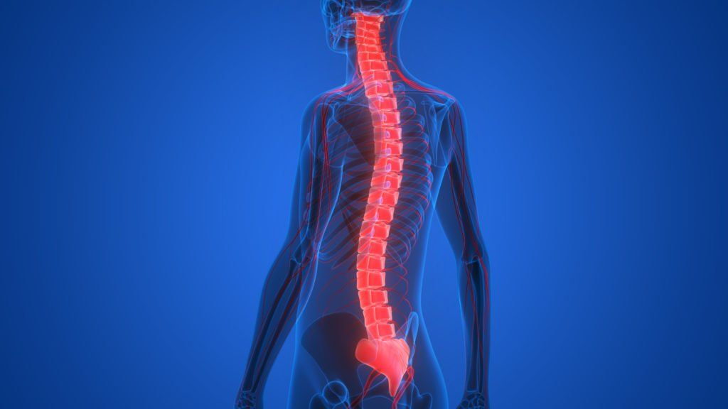 Body with Spinal Cord highlighted to represent spinal cord injuries