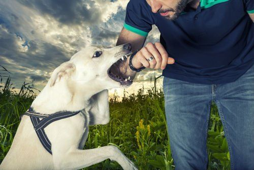 dog about to bite a man's arm