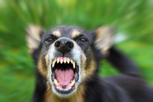image of dog with mouth open showing teeth