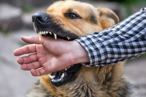 dog about to bite a mans hand