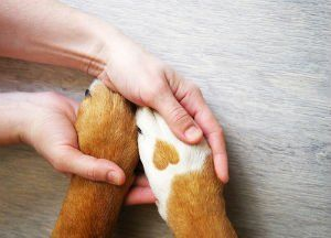 Our Palm Coast lawyers discuss animal abusers registry.