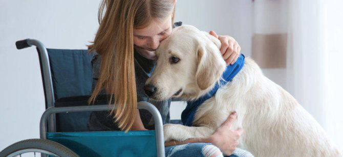 emotional support dog cuddling with a disabled girl
