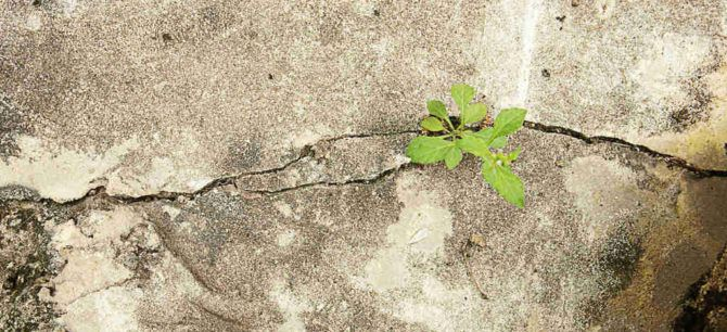trees growing in cement