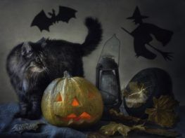 black cat with a pumpkin