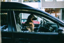 How to Keep Your Pets Safe in the Car