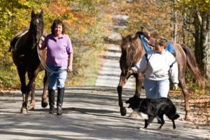 Share Walking Trails with Pets