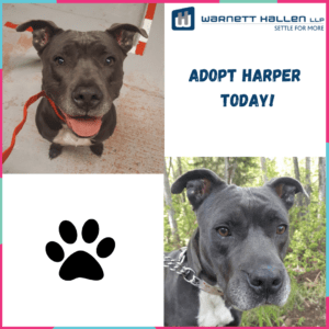 Pet of the Month: June 2020