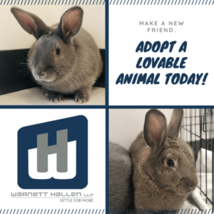 Pet of the Month: May 2020
