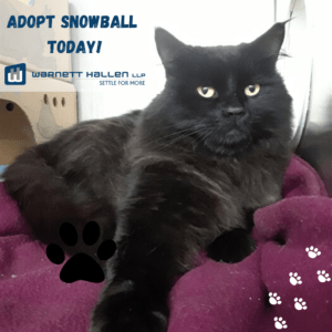 Pet of the Month: July 2020