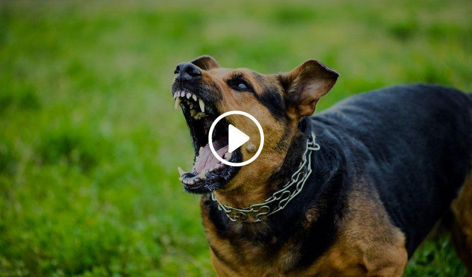 featured dog bite video banner