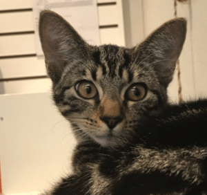 May 2020 Pet of the Month