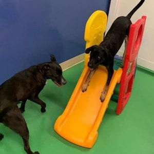 Dogs enjoying on slide in the daycare
