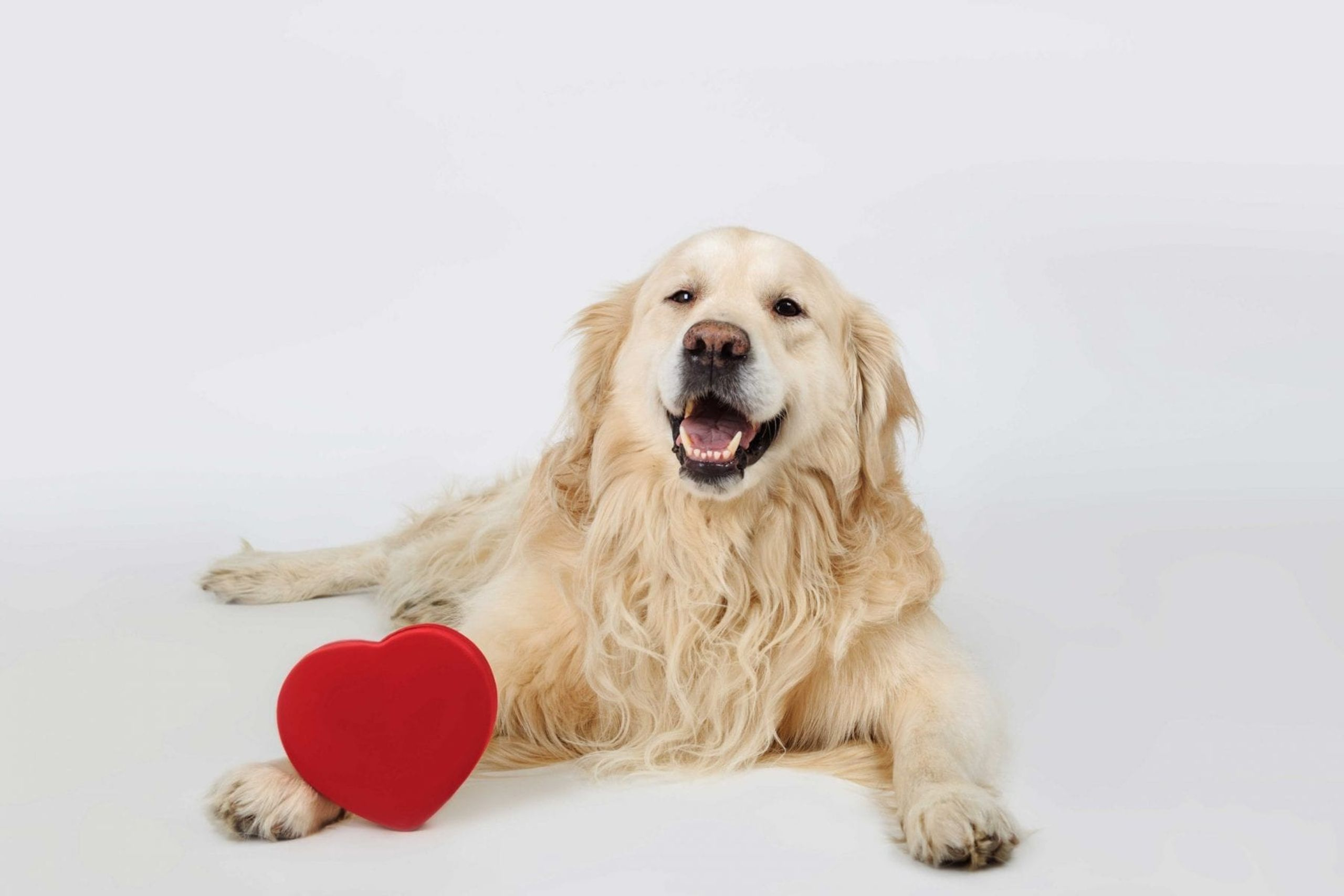 dog on Valentine's Day