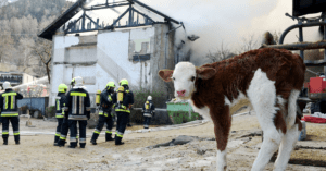 Farm on fire with firefighters.