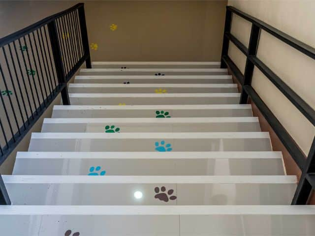 Concrete staircase with animals footprint as floor decals