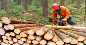 Logger cutting out logs