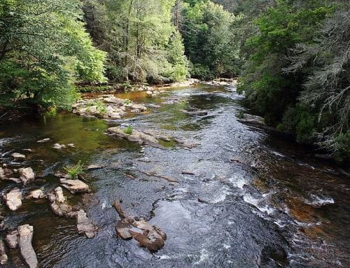 3 Reasons the Toccoa River Offers the Best Trout Fishing in North Georgia