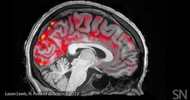 Blood flows out and cerebrospinal fluid flows into the sleeping brain | Science News