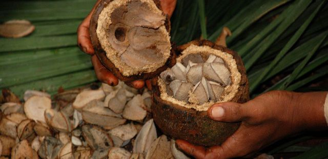 2013-05-13-foods-that-you-should-never-mix-with-popular-supplements-brazil-nuts
