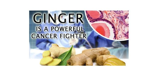 ginger kills cancer