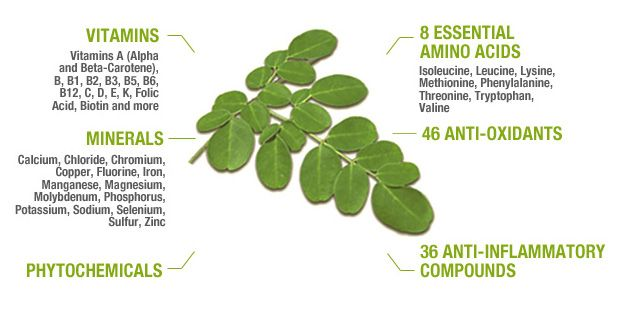 2014-04-10-6-uncommon-superfoods-that-could-help-your-health-status-soar-moringaoleifera