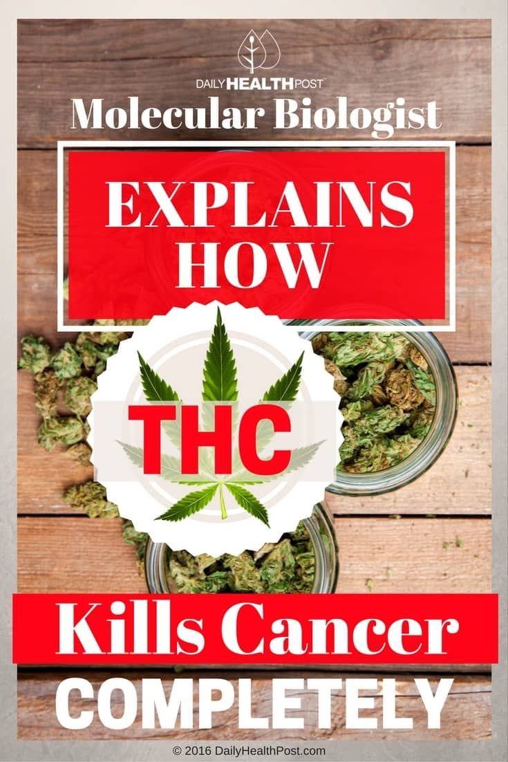 Molecular Biologist Explains How THC Kills Cancer Completely