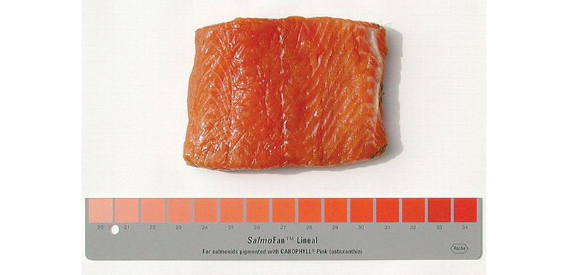 salmon artificial pink color