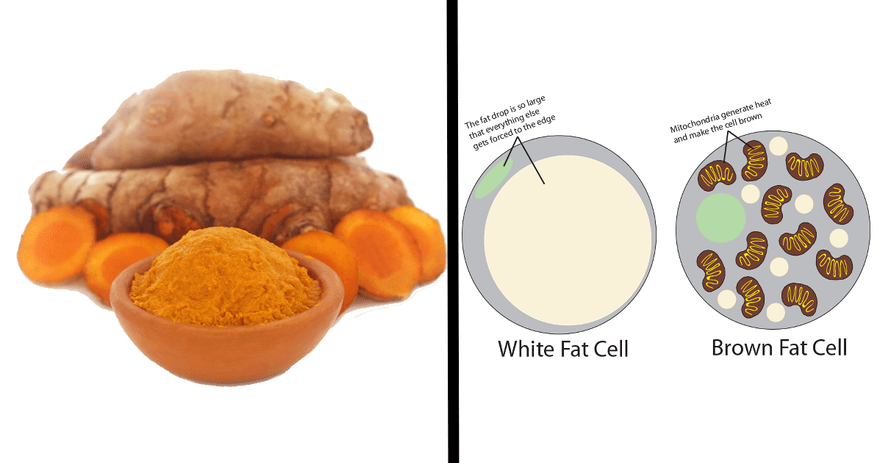 turmeric brown fat