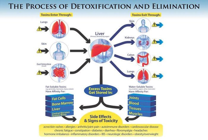 toxins detoxification