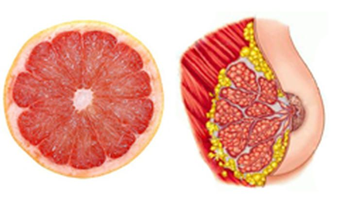 grapefruit and breast