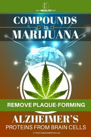 Compounds-in-Marijuana-Remove-Plaque-forming-Alzheimer's-Proteins-from-Brain-Cells