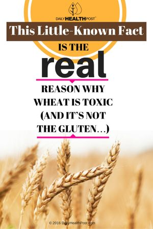This-Little-Known-Fact-Is-The-Real-Reason-Why-Wheat-Is-Toxic-And-NOT-The-Gluten