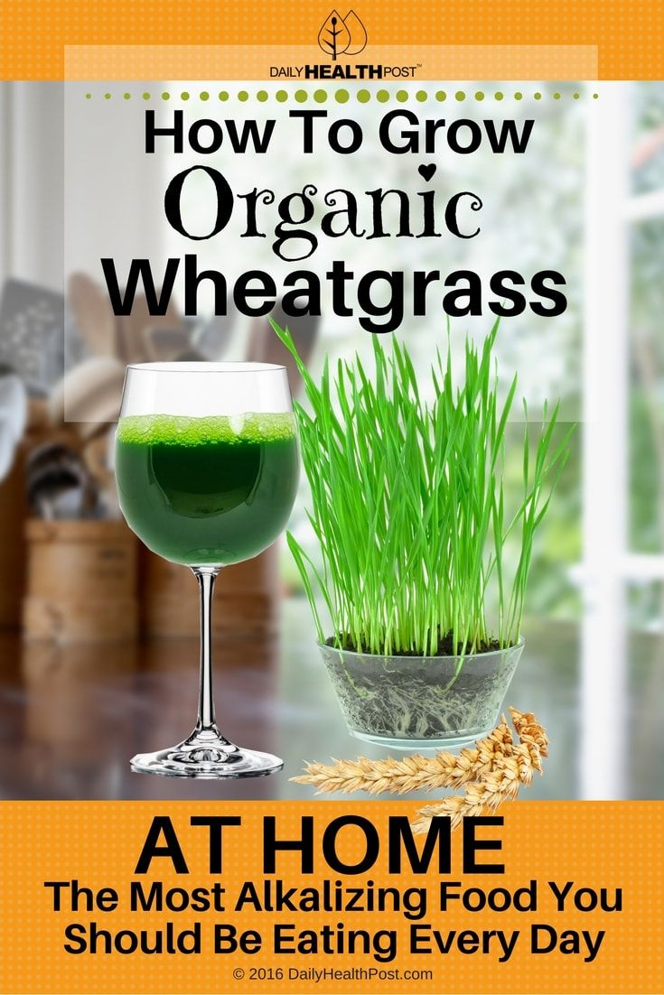 how-to-grow-organic-wheatgrass-at-home-the-most-alkalizing-food-you-should-be-eating-every-day