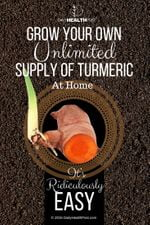 grow turmeric