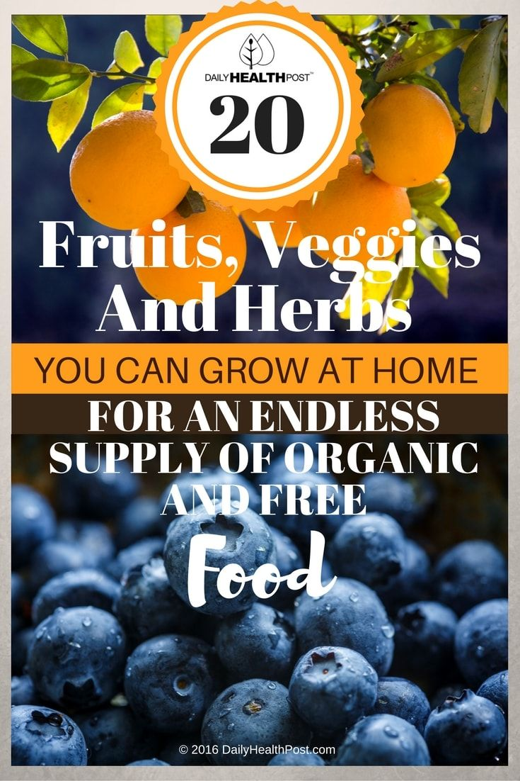 20-fruits-veggies-and-herbs-you-can-grow-at-home-for-an-endless-supply-of-organic