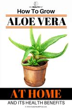 how-to-grow-aloe-vera-at-home-and-health-benefits