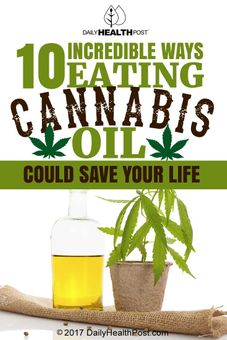 eating cannabis oil