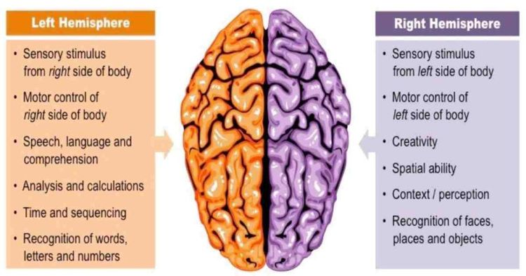 How to Sync The 2 Hemispheres of Your Brain for Better ...