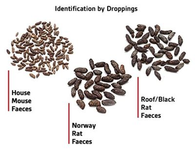 Identification by Droppings