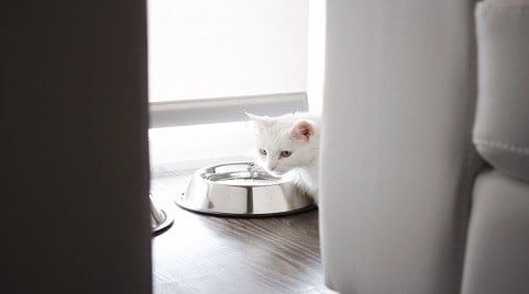 Basic Equipment for Apartment Cats