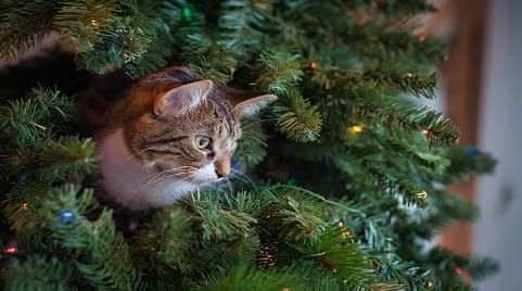 Finding the Right Scratch Tree