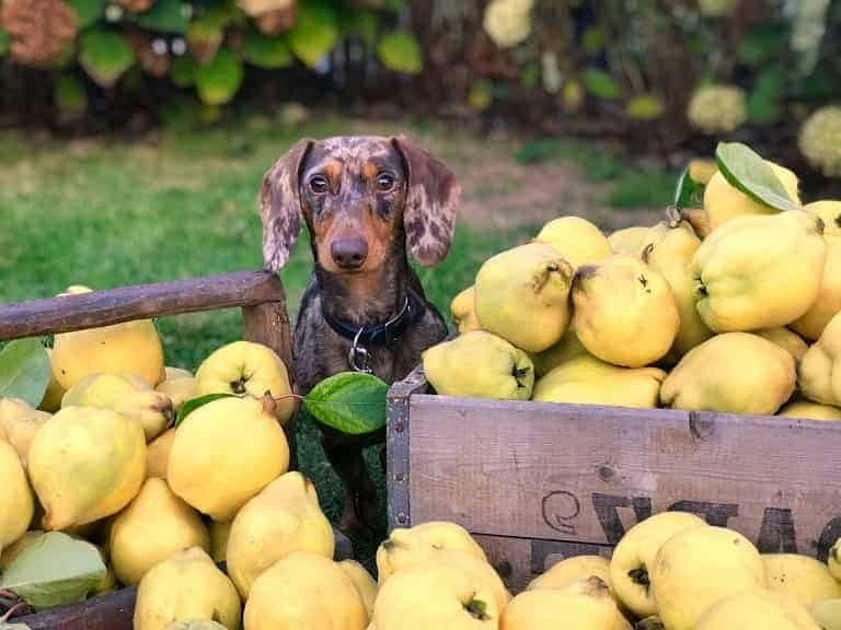 What Distinguishes Good Dog Food from Conventional Food-min